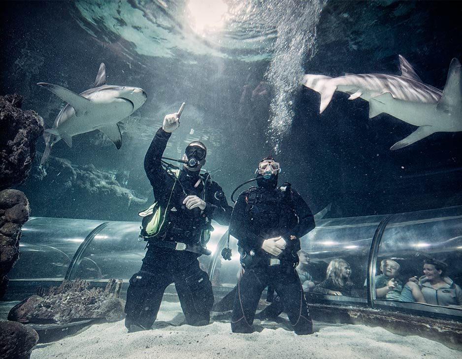 Image of   Big Shark Dive i Kattegatcentret